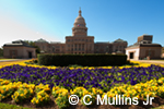 Texas State Capitol, northside, spring flowers
